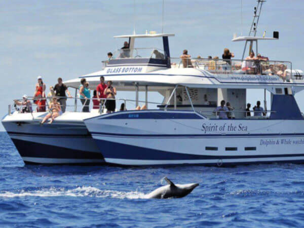 Spirit of the Sea Dolphin TRip Gran Canaria