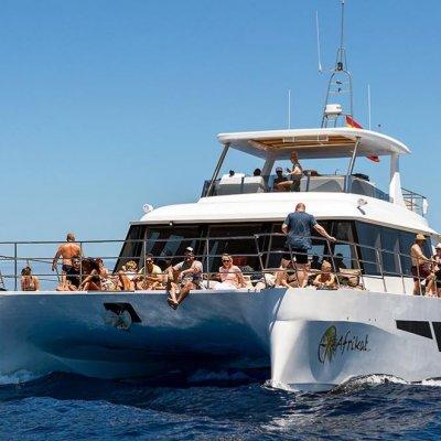 Africat Catamaran Tour